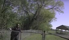 Heifer versus Temple police officer: Heifer wins