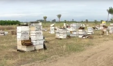 Fresno police uncover $1M beehive heist