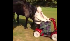 88-year-old finds a way to spend time with his beloved horses