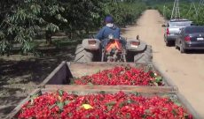 We cherry-picked this harvest video just for you
