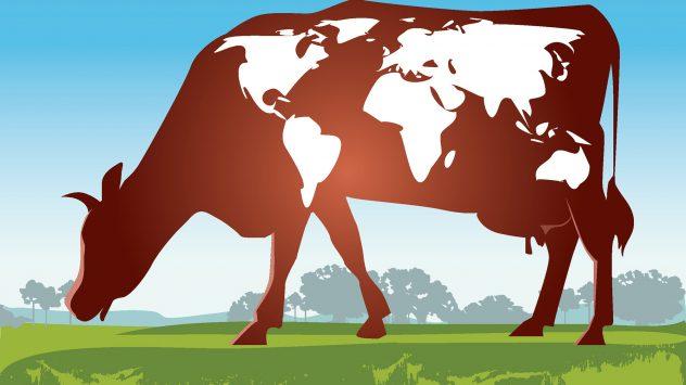 world cattle