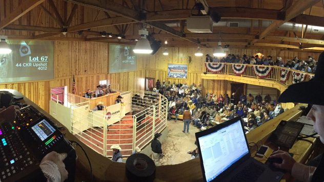 Superior Livestock Auctions | AGDAILY