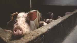 National Pork Board | AGADILY
