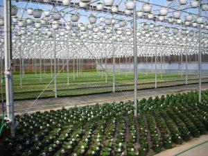 Jamesport Greenhouses (Courtesy of Long Island Farm Bureau)