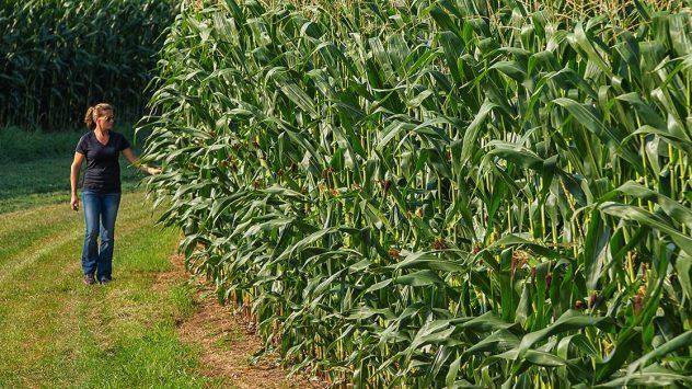 The Farm Babe on Monsanto | AGDAILY