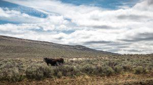 grazing regulations