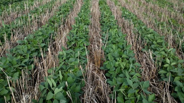 indiana cover crops
