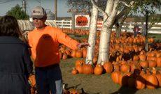 Wisconsin pumpkin farmer fights pancreatic cancer