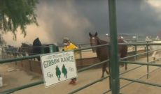 Reporter puts down mic to save horses from California wildfires