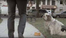 Ad parodying Humane Society of the U.S. commercials is seasoned with right amount of sauce
