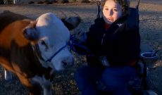 12-year-old with dwarfism finds passion for showing mini-cow