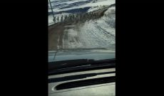 South Dakota rancher shares road with antelope