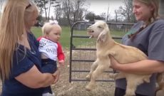 These kids — 1 human, 1 goat — know just what to say to each other