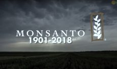 Nick Saik's farewell tribute to Monsanto — in song
