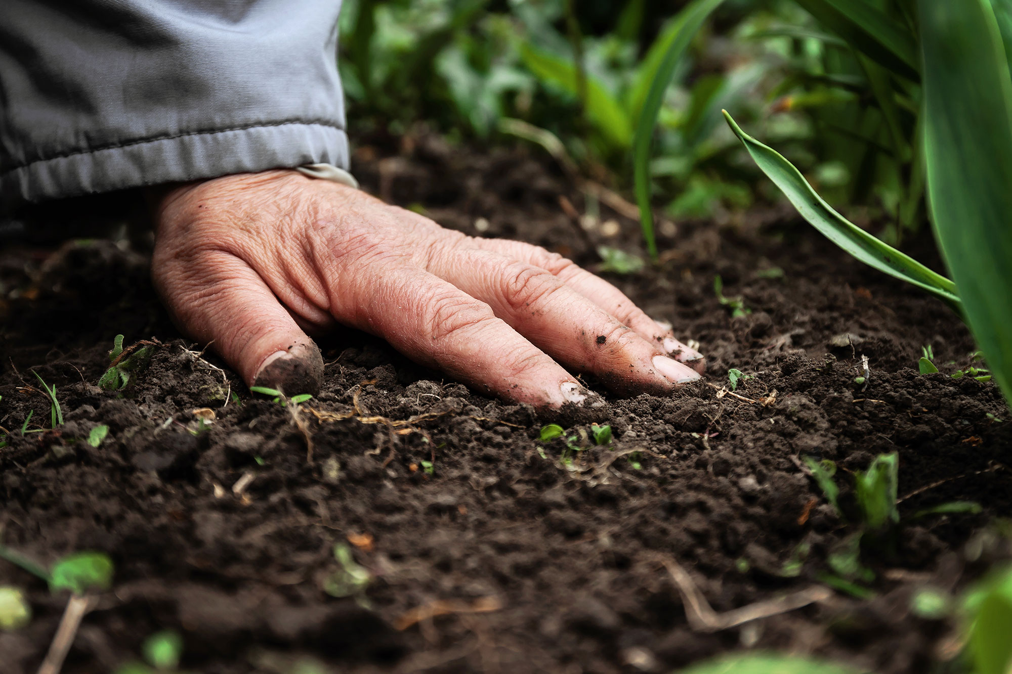 Soil  A Revolving Bucket Or A Biological System