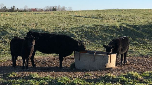 cattle waterer