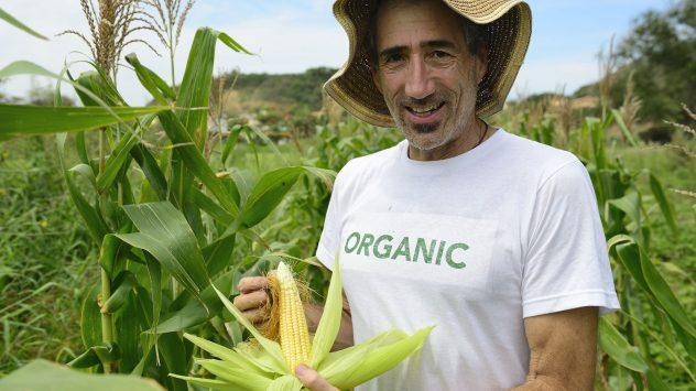organic corn farmer