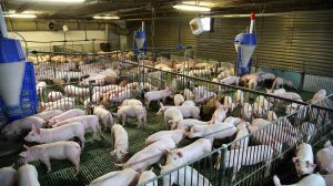 Pig Welfare Symposium