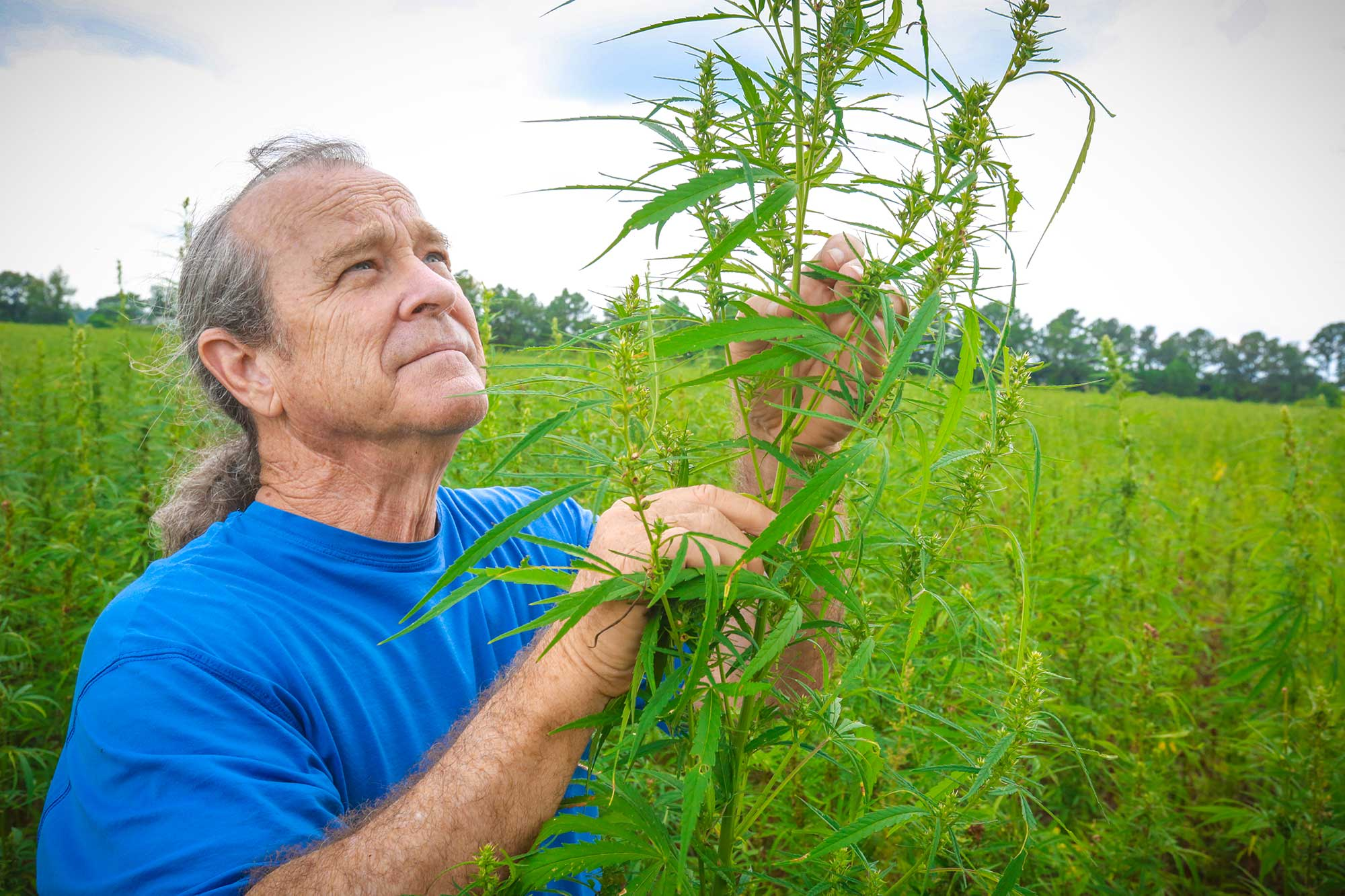 Tobacco growers may find new avenue in hemp farming | AGDAILY