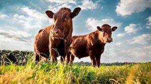 U.S. beef exports