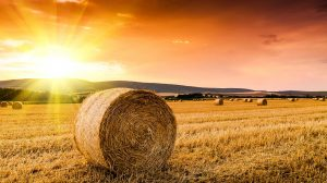 quality hay