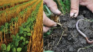 soil health practices