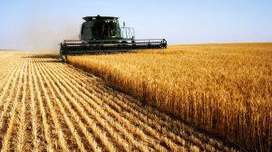 National Wheat Yield