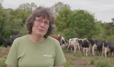 Dairy woman goes above & beyond for cow comfort on the farm
