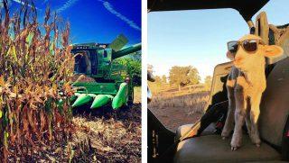farm photos