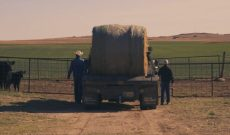 Ranching provides a great example of family & perseverance