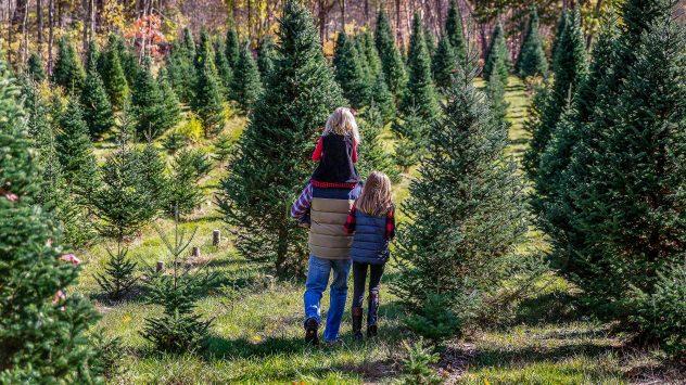 christmas tree farm family