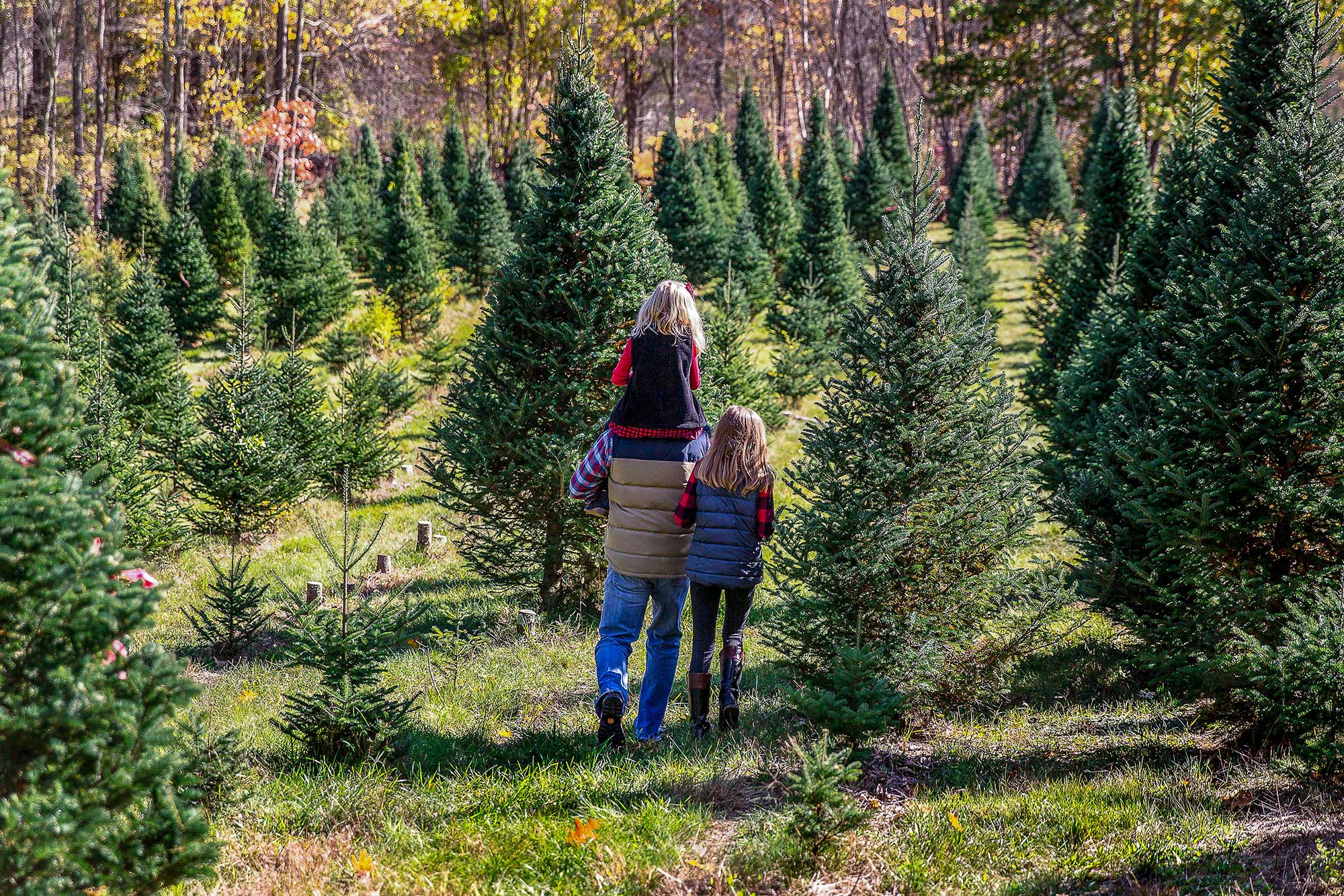 Christmas trees: The sustainability of real vs. artificial ...