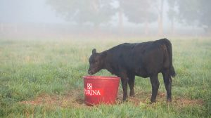 purina feed tub