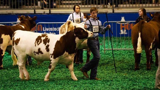texas livestock show