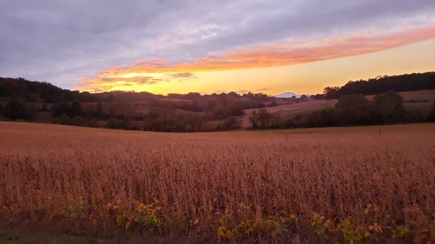 wilmont farms