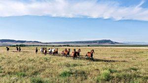 25 ranch