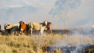 Australia farming
