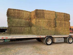 go seed alfalfa