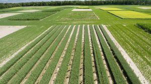 crops climate