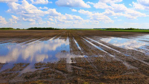wet farm field